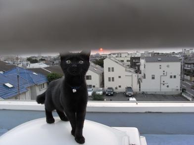 クロピー屋上