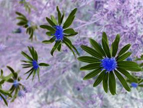 反転カラー花
