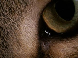 猫の目アップだ