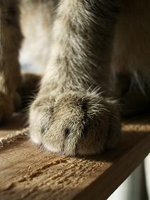 猫らしい足