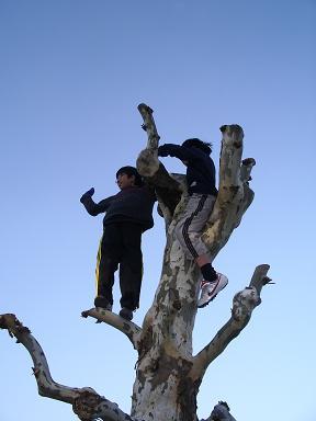木登り2人