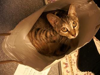 ミルキー、袋の中