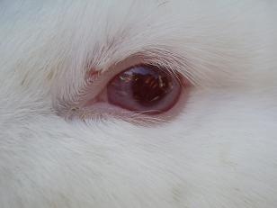 うさぎの目