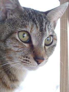 猫アップ2