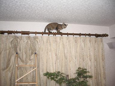 猫、天井近く