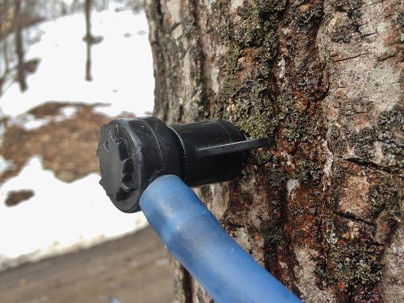 木へ差込アップaaa