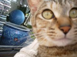ミルキーと魚鉢