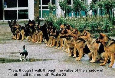 猫、王道をいく
