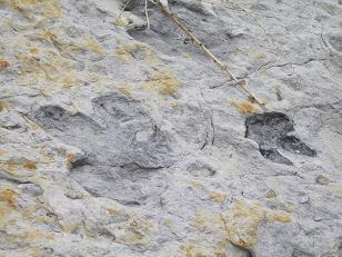 恐竜の足跡