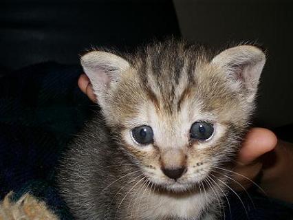 ミルキー青い目