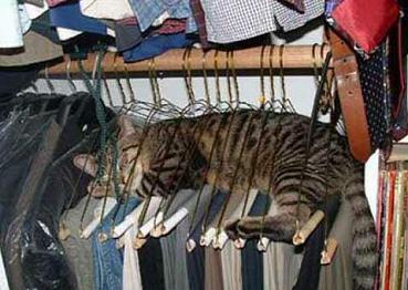 窮屈だよ、猫