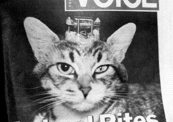 虐待と猫3