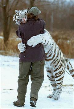トラとの抱擁