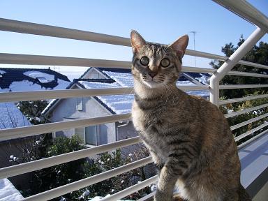猫と雪景色