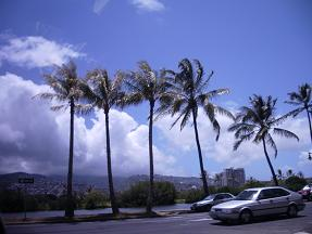椰子の木4本
