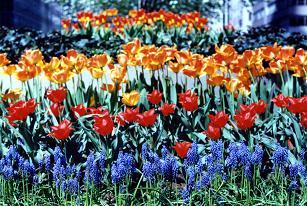 パークの花