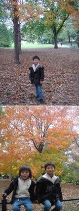 Autumn in Central park 2