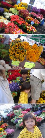 Green Market Autumn 1