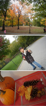 Autumn in Central park 3