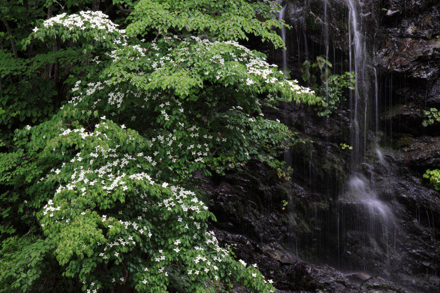 2571-虹の滝-021