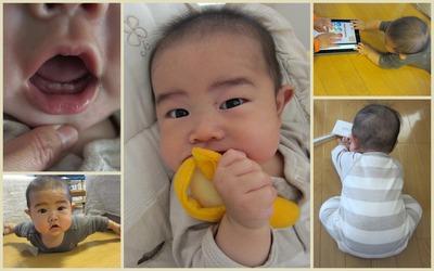 泰生6ヶ月