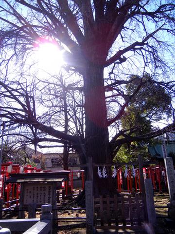 kisibojinn_tezukuriiti_2013