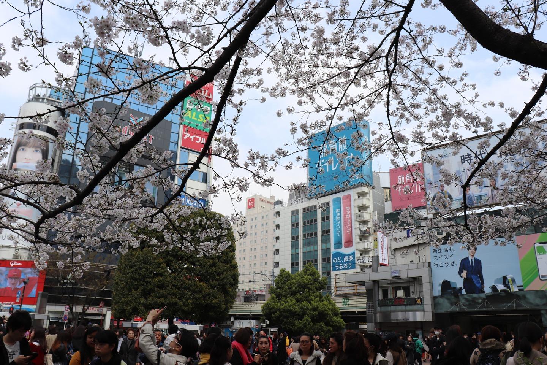 渋谷2019春