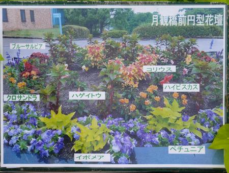 寝屋川公園 花-1