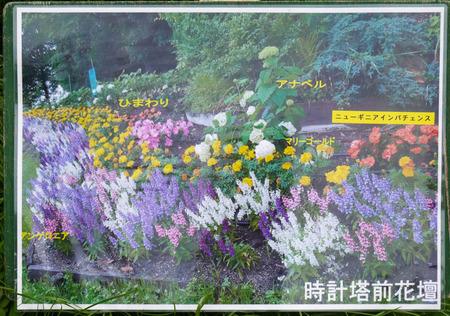 寝屋川公園 花-11