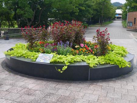 寝屋川公園 花-2