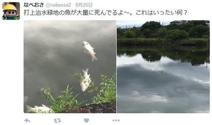 打上川治水緑地で見つかった魚の死骸