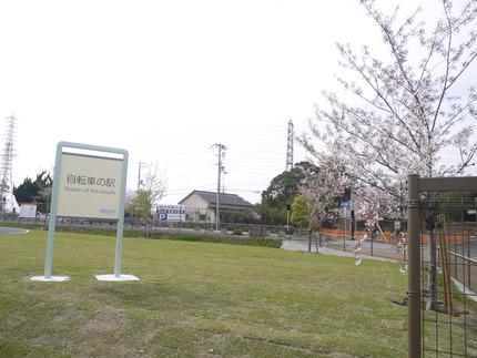 看板と桜の木1