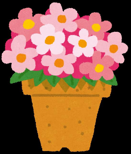 【怪奇現象】植木鉢の半分しか植物が育たない理由