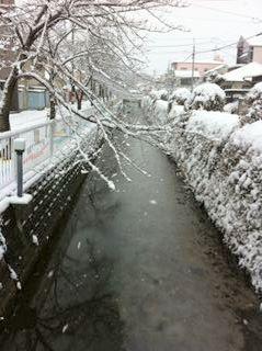 今年も雪が。