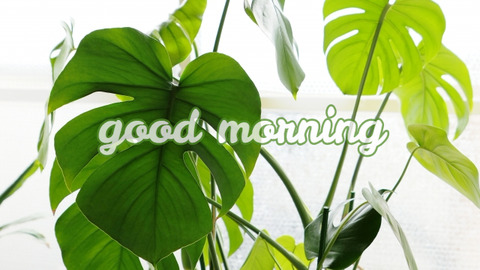朝活から始めるシンプルな暮らし方 #9 朝活太朗の朝時間