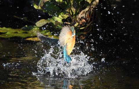 水浴びtsD50_6325