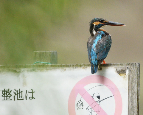 魚釣り禁止tsD52_2472_00001_01