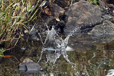 飛び込み水滴tsD50_2324