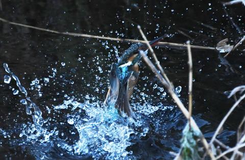 水浴びtsD50_9605