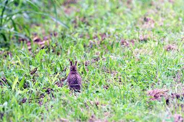 子ウサギsD50_3623