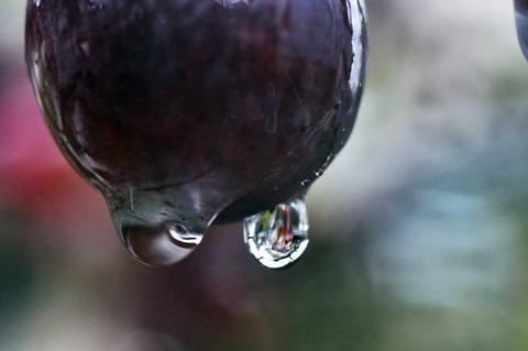 ブドウ水滴sDSC_0034