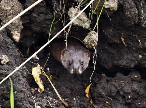 ネズミ穴をチェックtsD50_7898