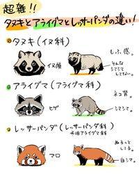 タヌキ、アライグマ、レッサーパンダの見分け方