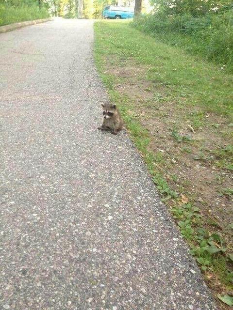散歩してたらタヌキの赤ちゃんが地面に座ってた…