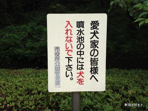 2012070805水の芹ヶ谷公園