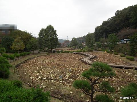 20111105070ハス田@薬師池公園