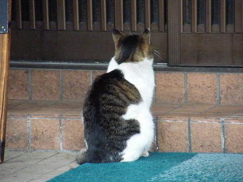 20090418188.jpg 猫 ネコ ねこ