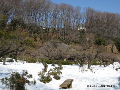 20140222028雪と梅の花@薬師池公園