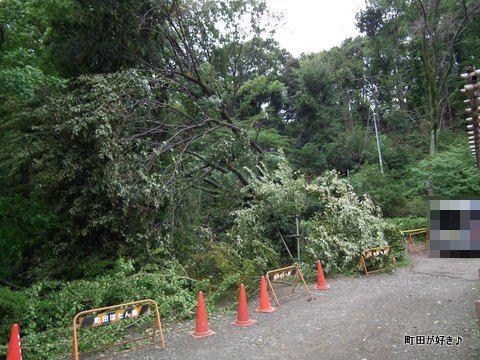 2011092318薬師池公園