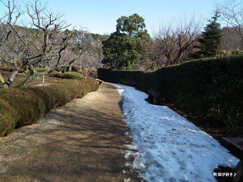 2011021346雪残る@薬師池公園